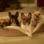 Chopper, Tilly, Boone and Ava